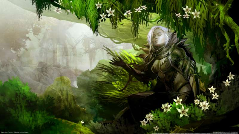 Guild Wars 2 wallpaper or background 23